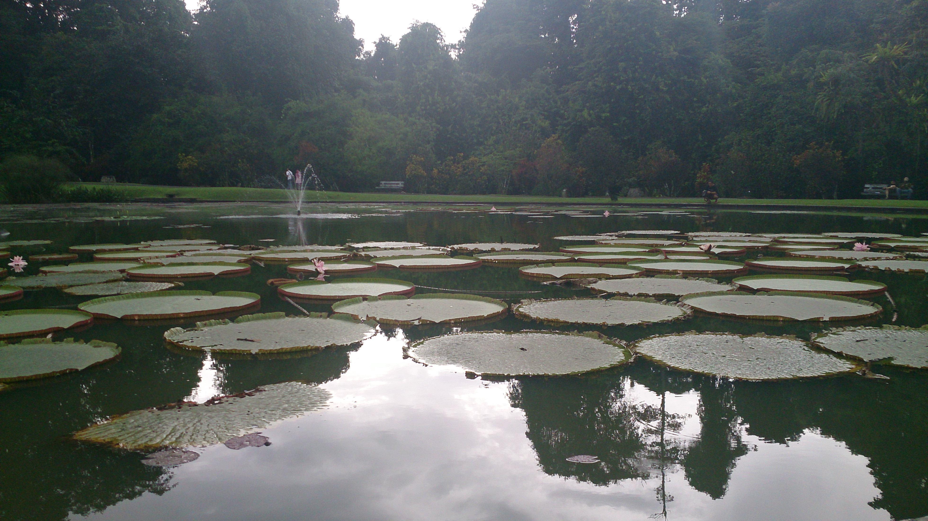 高原の避暑地・ボゴールの巨大植物園