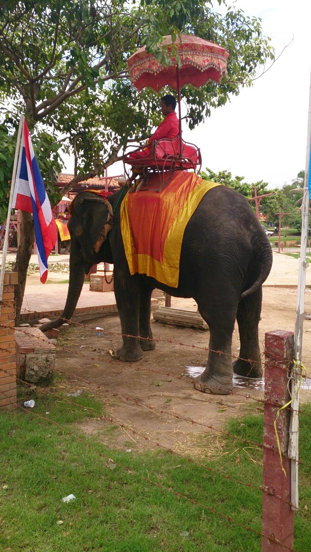 癒しの家・クンペーン・レジデンスと象